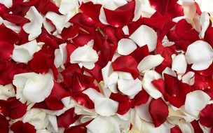 delicate white and red rose petals