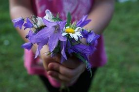 strauss flowers purple color hands child
