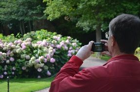 man takes pictures of a Bush of flowers
