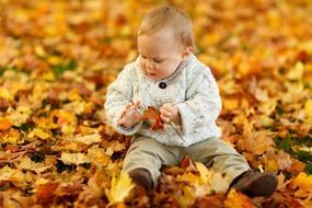 baby boy playing in the autumn leaves