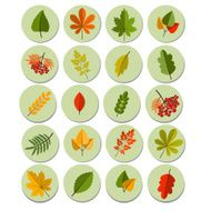 Set of colorful autumn leaves Autumn icon set Fall leaves