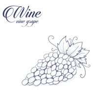 Bunch of grapes on white background for label wine