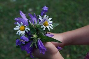 flowers strauss purple and white color in the child hands