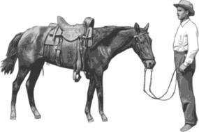 cowboy with horse drawing