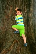 child playing on a tree