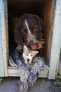 dog is hugging a kitten