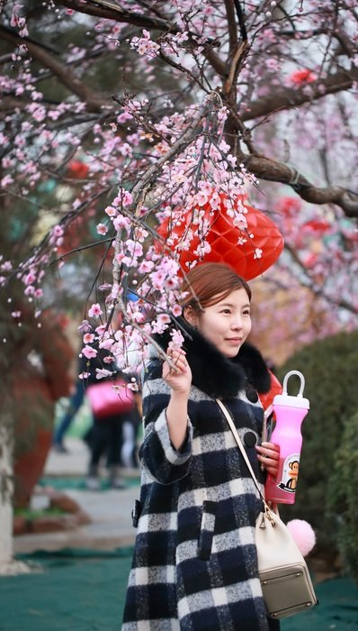 beijing girls chinese new year sakura tree