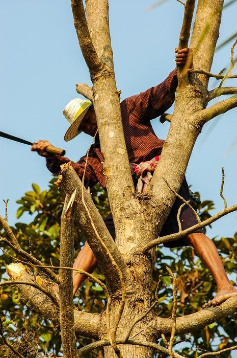 Man on a tree with a felling of the forest
