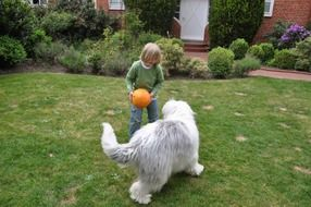 Child playing in the front yard with a ball and a dog
