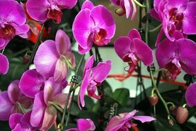 A lot of the purple orchid flowers