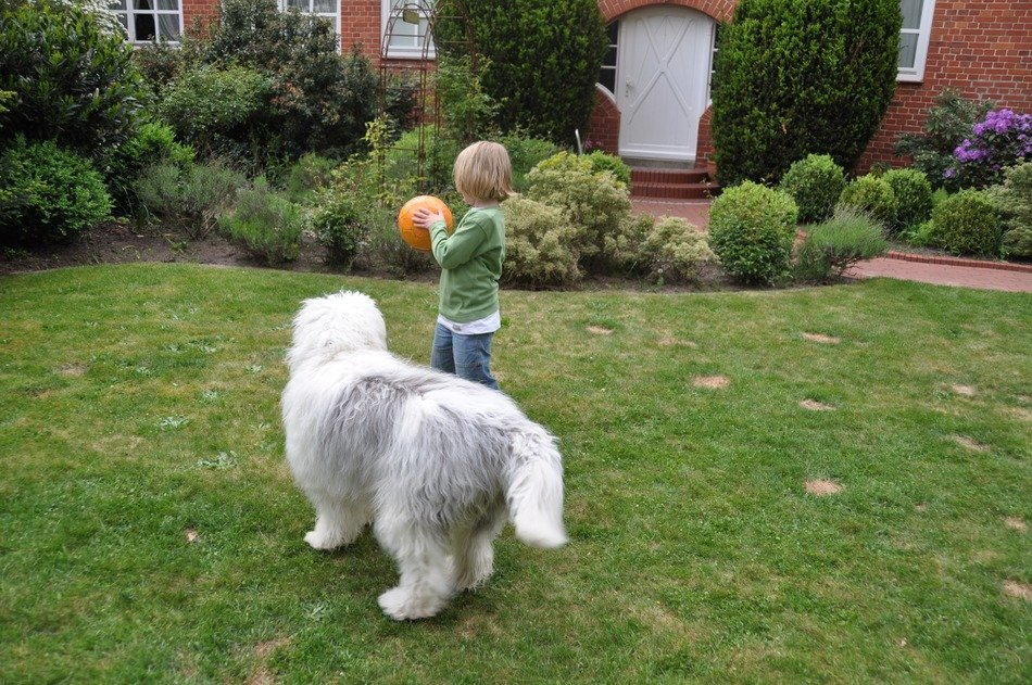 Little boy playing in the yard with a ball and a dog