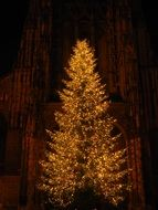 christmas tree m C3 BCnster
