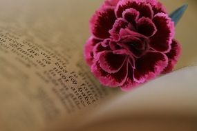 old bible flower
