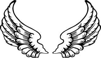 poto of the angel wings