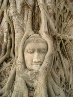 figure of the head among the roots on the wall of the temple in Thailand