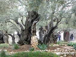 photo of the gethsemane garden