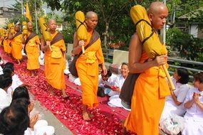 The passage of Buddhist monks along the path from the petals of roses