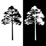Pine Trees Black and White Silhouettes N2