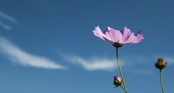 pink flower against blue sky