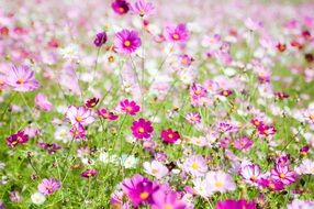glade with beautiful pink and purple flowers