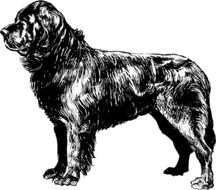 black dog sketch