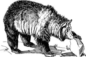 grizzly bear as a graphic image