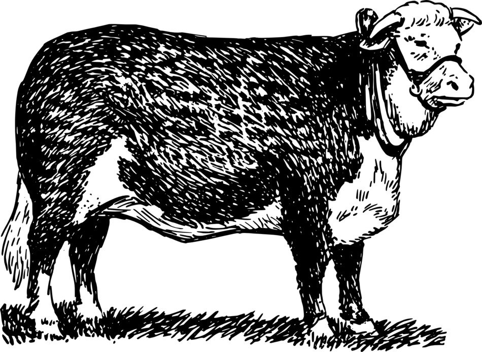 black and white drawing of a bull in a meadow