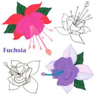 Fuchsia Pink and purple flower