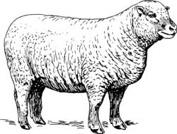 black and white drawing of a sheep in a meadow