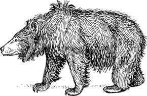 black and white drawing of a grizzly