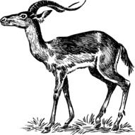 black and white drawing of an antelope