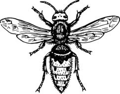 hornet wasp animal drawing