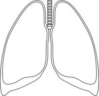 clear lungs anatomy