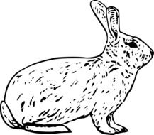 black and white drawing of a hare