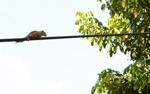 squirrel on the electric wire