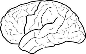 human brain with lines on white background