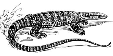black and white drawing of a giant lizard
