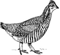 Black and white drawing of a bird clipart