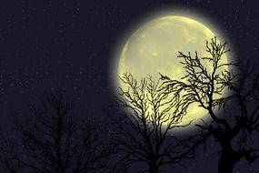 drawn tree branches on the background of the full moon