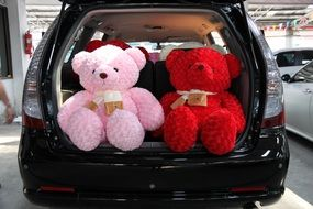 Two huge teddy bears in the trunk of the car