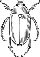 beetle in black and white graphic representation