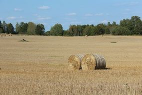 two rolled haystacks on a field in Sweden