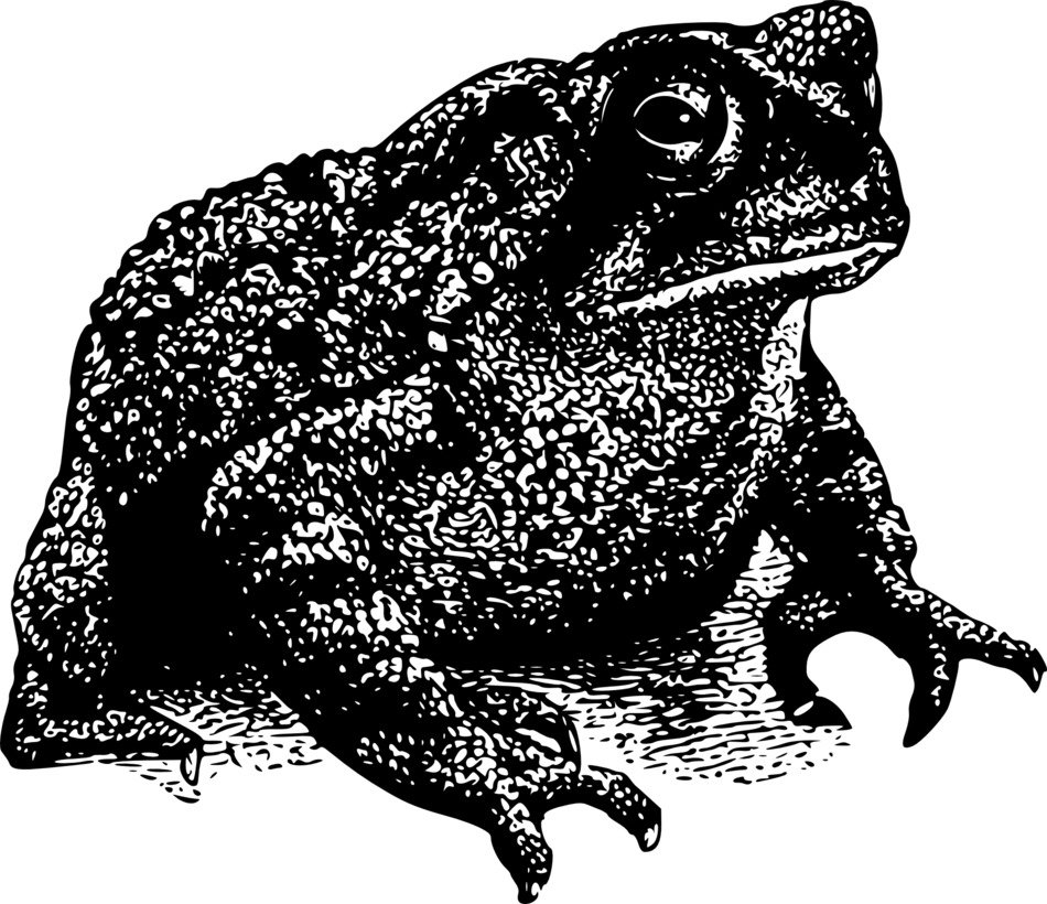 toad, black and white illustration