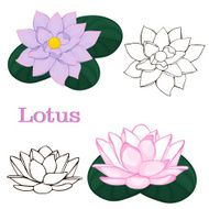 lotus flowers contours of flowers on a white background