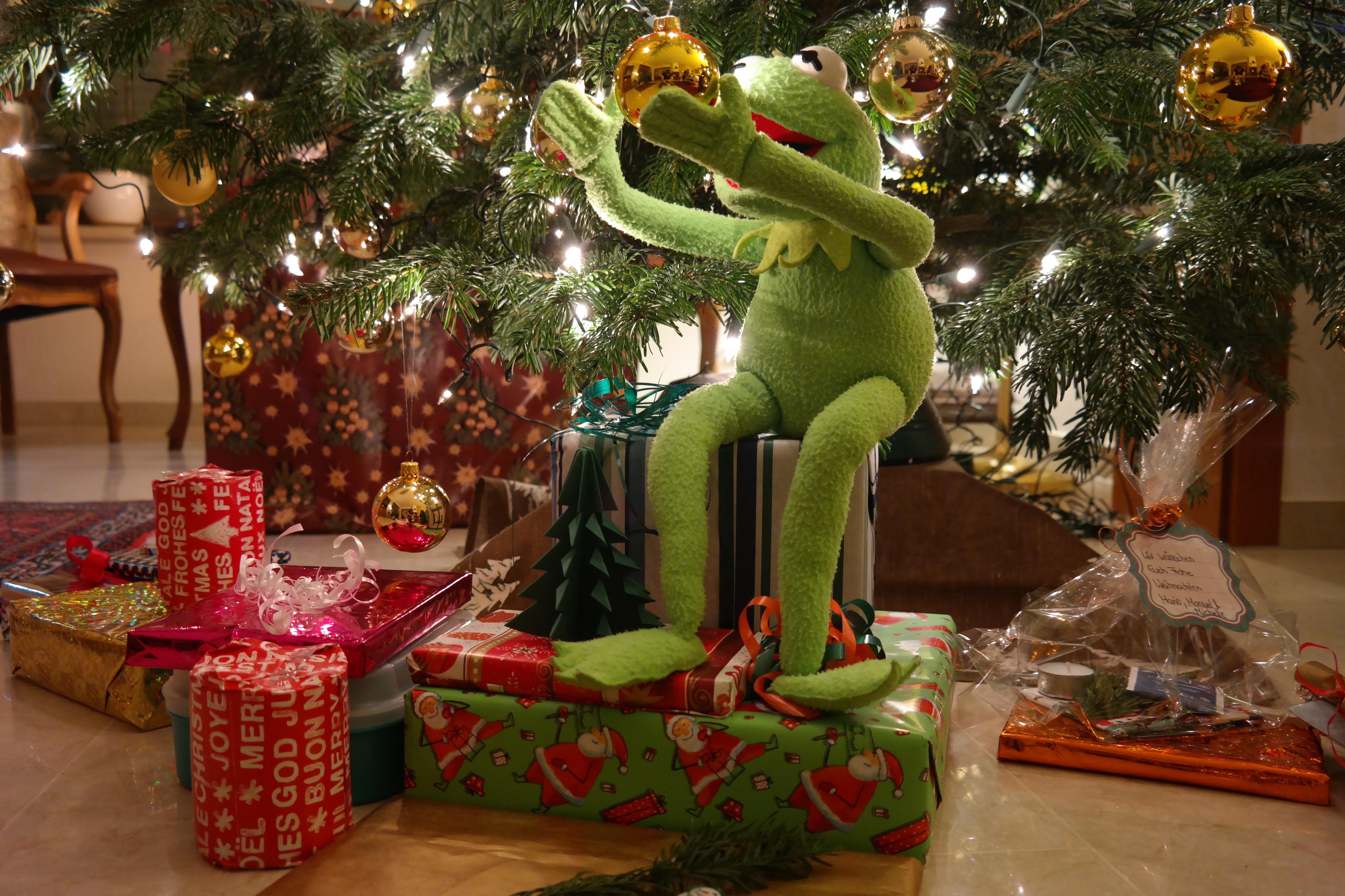 Kermit the frog under christmas tree free image
