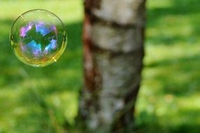 soap bubble on wood background