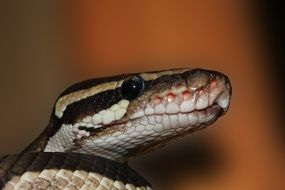 snake on a blurred background