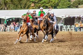 sport polo cross horse animal competition