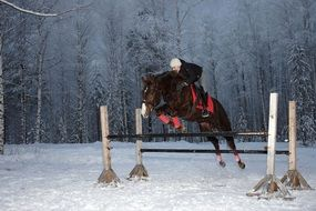 horsewoman makes a jump over an obstacle