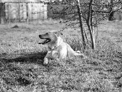 Black and white photo of dog on meadow